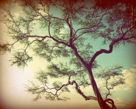 Kiawe Tree - Fine Art Nature Photography print - Maui