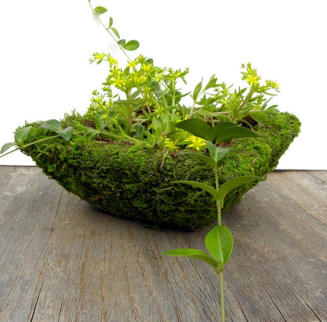 Square Mossy Basket-Great for Bonsai-6x6x3 Wire basket with liner-Fairy Garden Planter-Wedding Centerpiece