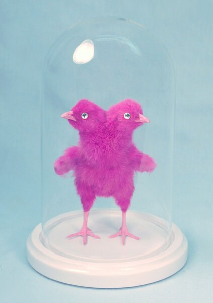 PIMPED PEEP pink two-headed chick rogue taxidermy sculpture for cabinet of curiosities