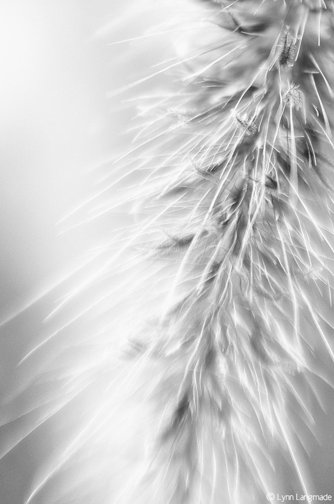 "Black and White Photography - black and white photo of grass, nature wall print - grass photograph - ""Magic Wand"" - LynnLangmade"