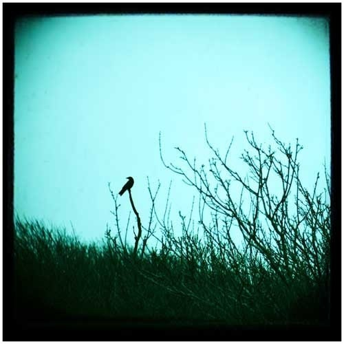 I thought I  saw a bird alight - 8 x 8 Original Photographic Art