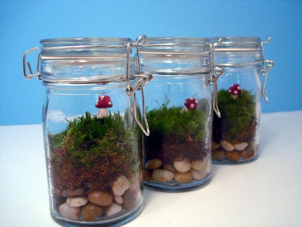 Set of Three Mushroom Moss Terrariums