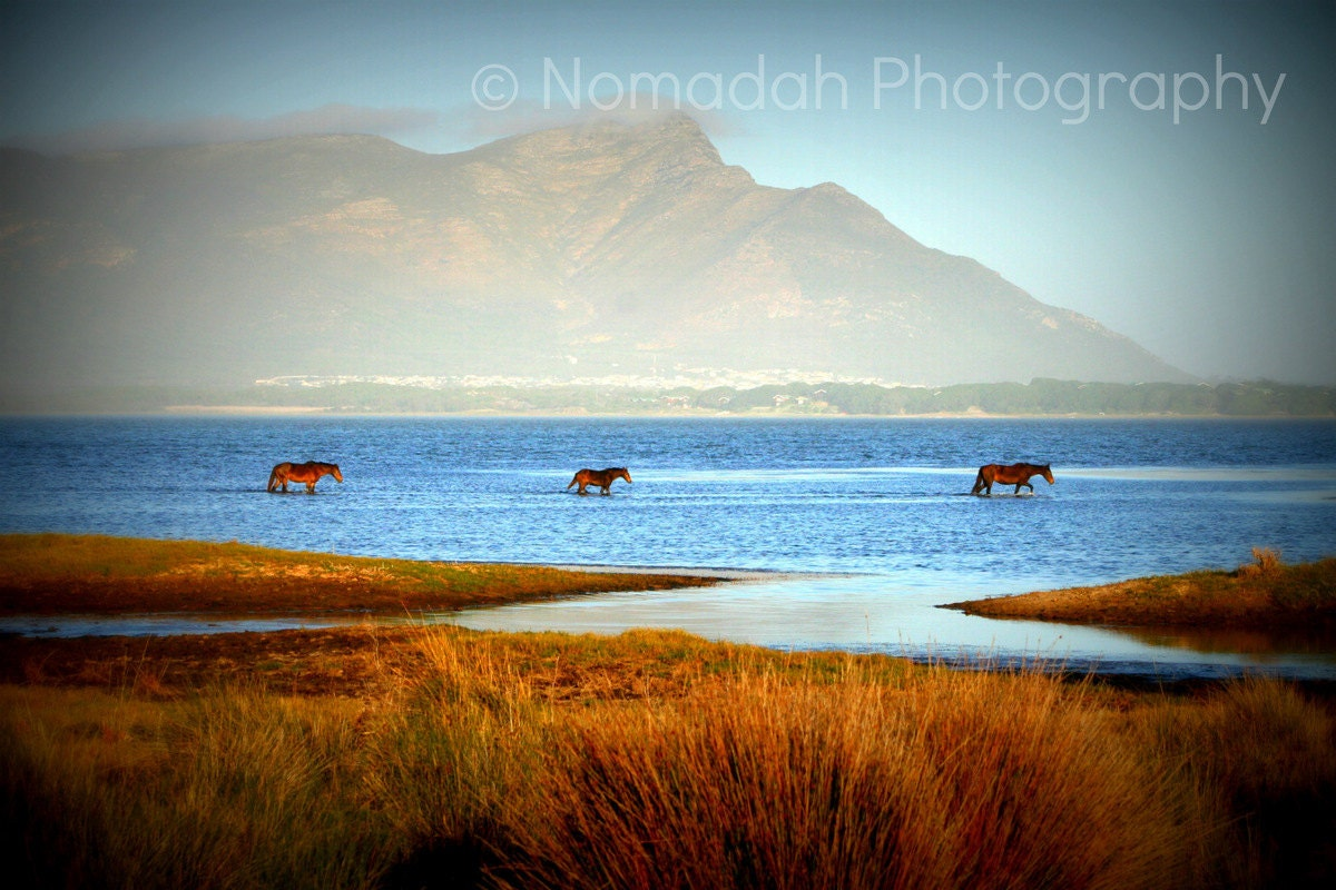 Wild horses, Landscape phototography, Mountains, lake, water, river, blue and orange, South Africa 13 x 19 - NomadahPhotography