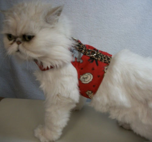 kitty litter tray