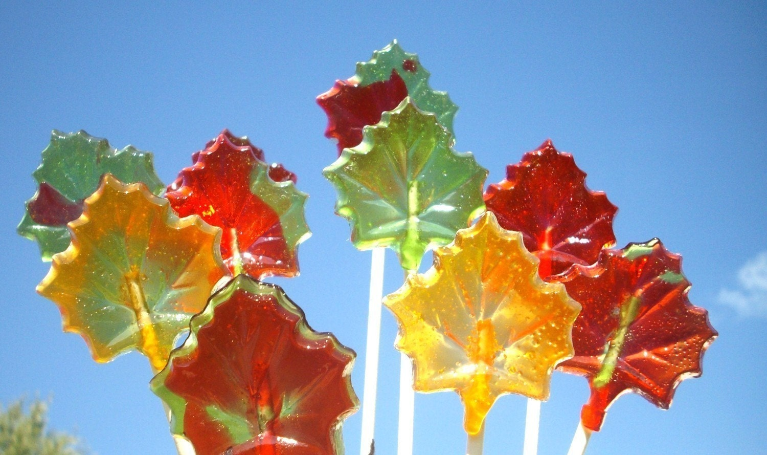Maple Leaf Candy Lollipops Beautiful Fall colors