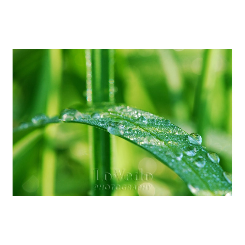 Green Grass Photo Dew Drops Refreshing Emerald Macro Photography 5x7 Small Print Run Barefoot