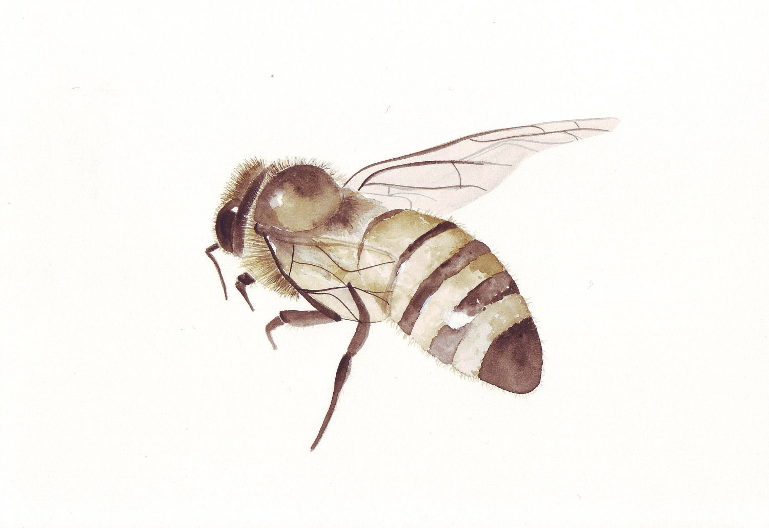 Bee- Insect- Sepia- Print of watercolor painting- (Splodgepodge)