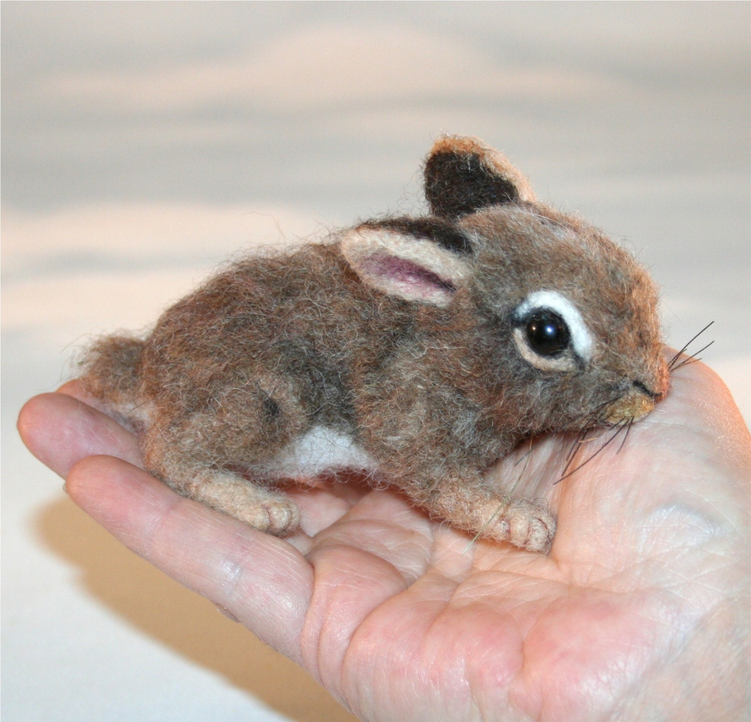 Baby cottontail rabbit - photo#16