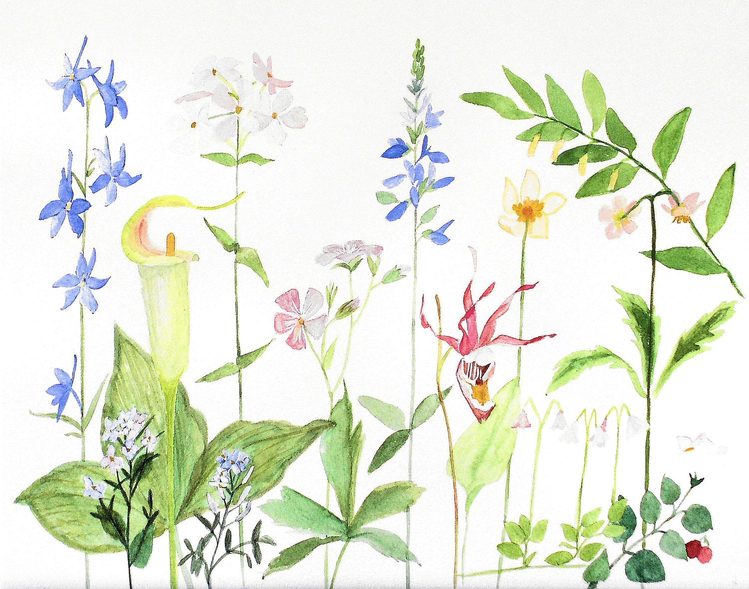 Watercolor Painting/ Giclee Print/ Woodland Wild Flowers/ Professional Museum Quality/ Artwork by Laurie Rohner/ 9 x 12