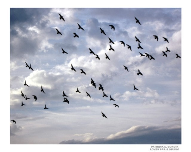 "Flock of Birds Photo, ""United"", Tribute to 9/11, 20 x 16,  Fine Art Photograph"