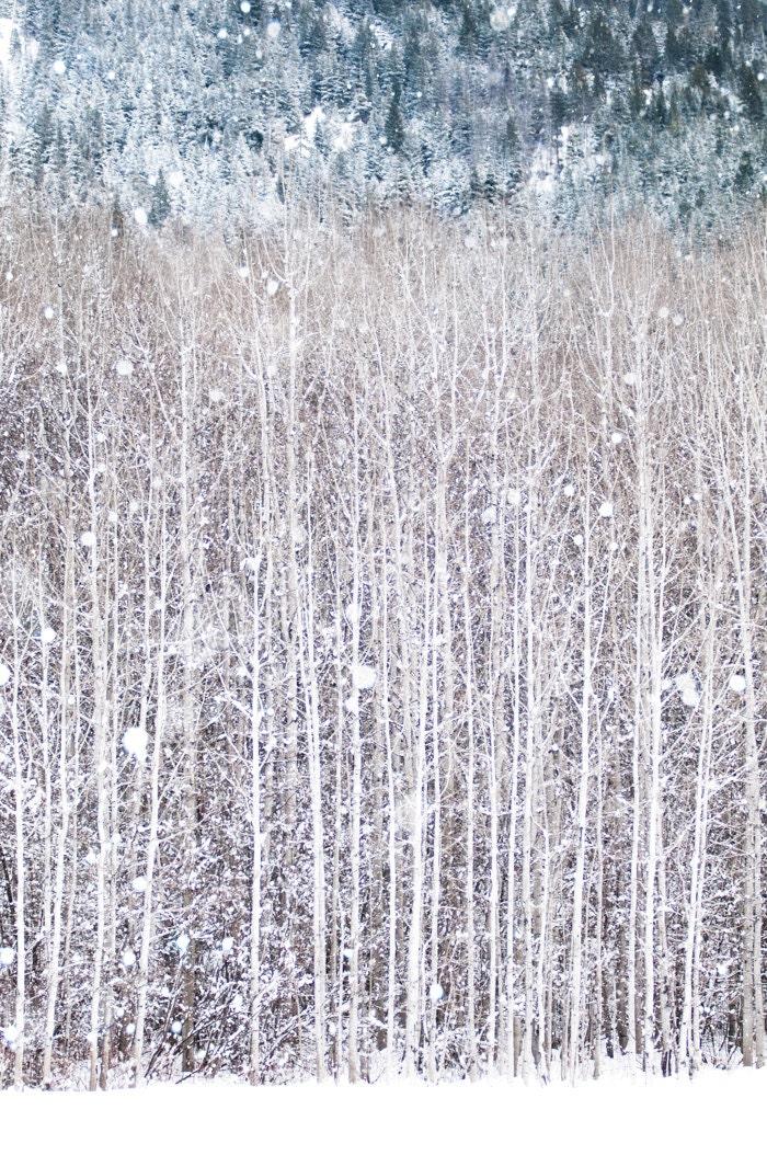 Winter Photography, Birch Trees in Snow, Nature Photography, Woodland Wall Decor, Large Wall Art - GeorgiannaLane
