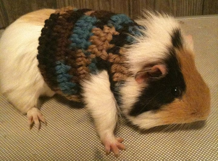 Guinea Pig Sweater Custom Orders
