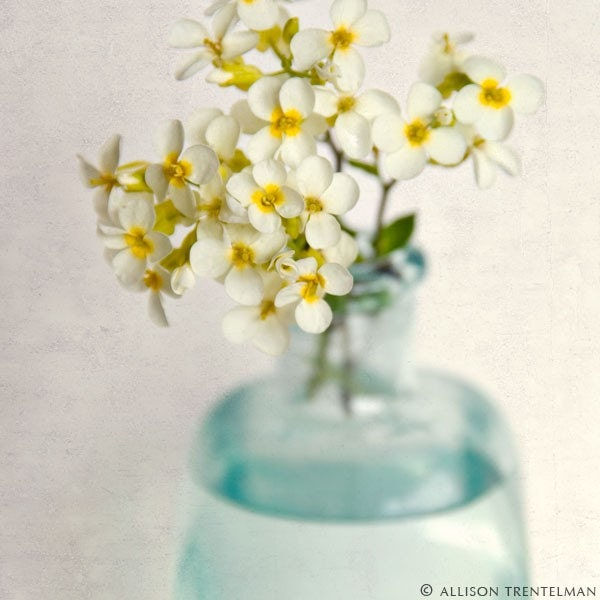 Yellow Rock Cress Flowers - fine art floral botanical photography print - nature wall art - shabby chic home decor