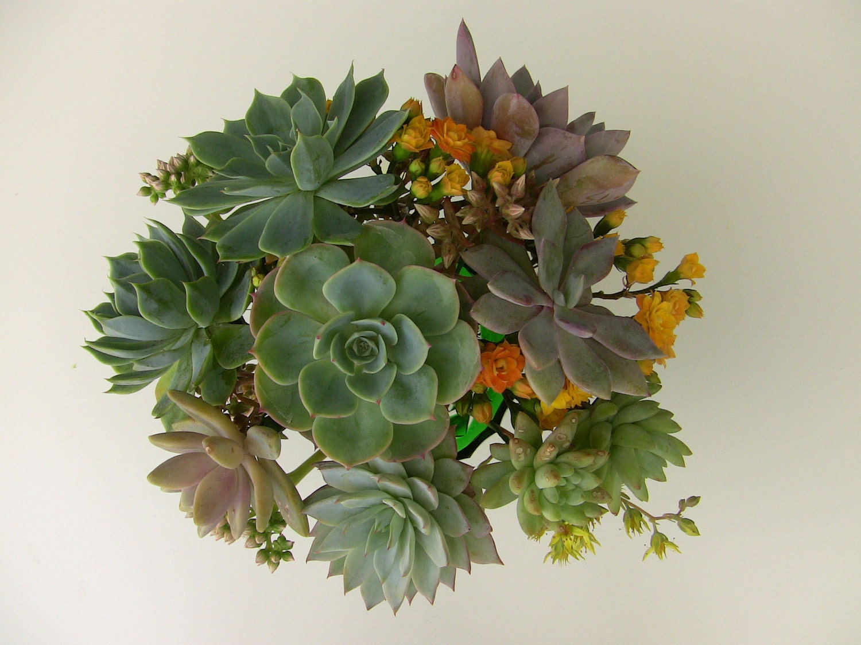 Diy Wedding Flowers Succulents : Items similar to diy wedding bouquet succulent