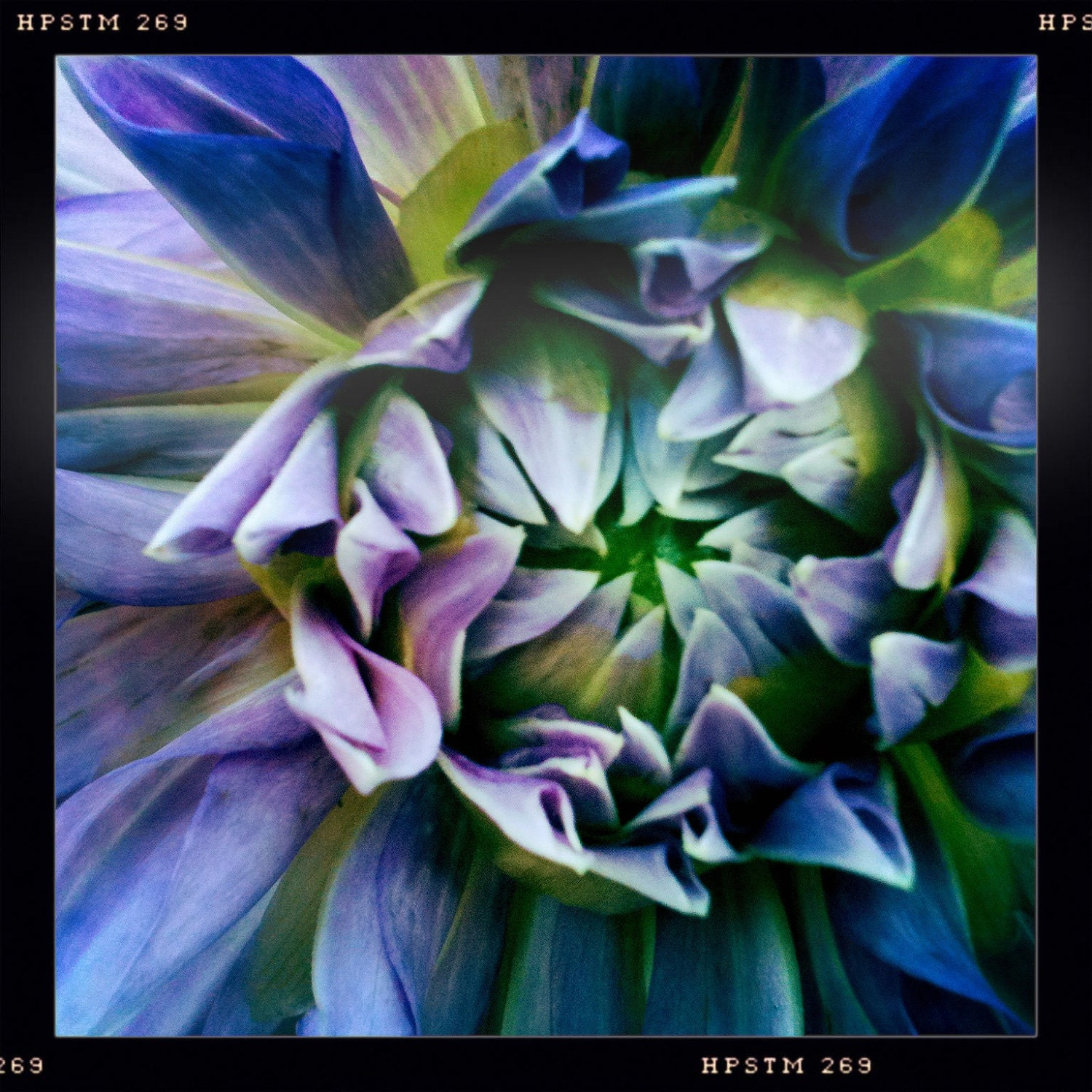 Purple Dream Blossom....Hipstamatic Original Photo