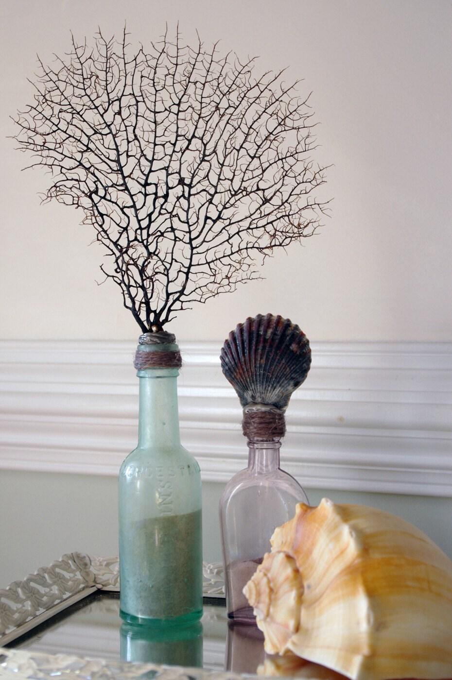 Vintage Aqua Glass Bottle with Black Sea Fan