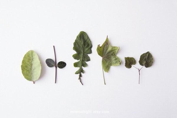 Herbariums II. 8x10