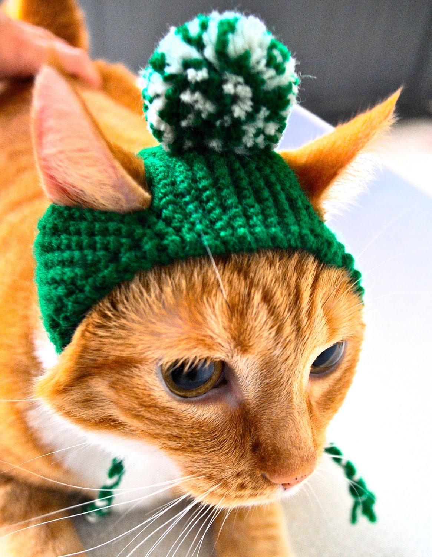 green pom pom knit cat cap