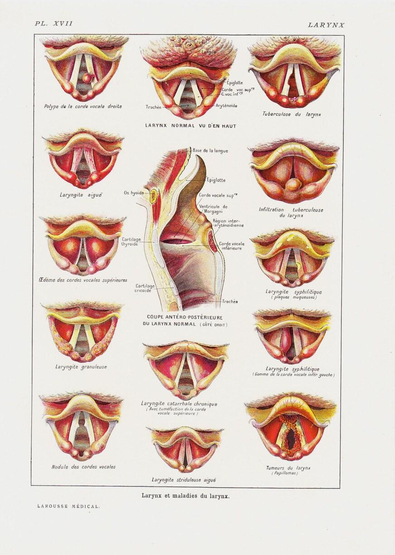 Anatomy of the voice box