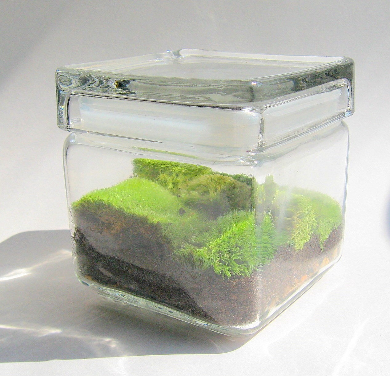 Mini Moss Terrarium (Galatea)