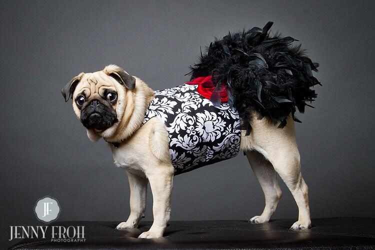 Черное перо Дамаск Harness собак платье