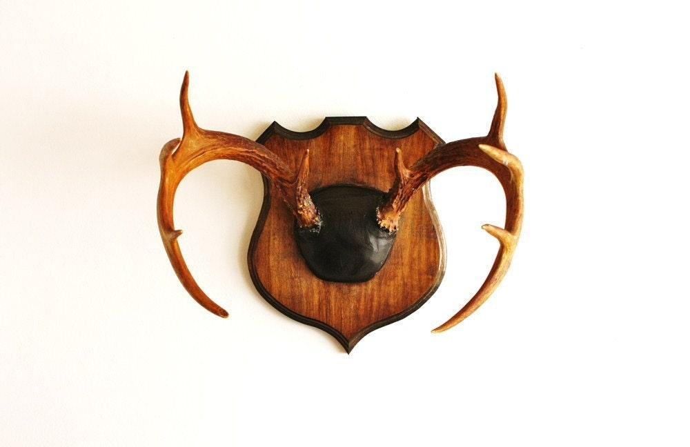 Vintage deer antlers mounted on a solid wood plaque