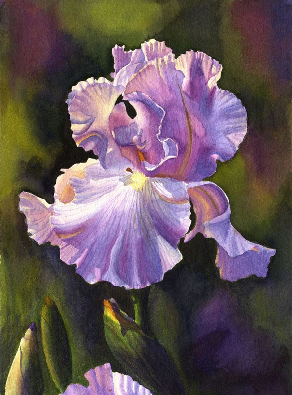 Purple Iris Art Watercolor Painting Print By By Cathyhillegas
