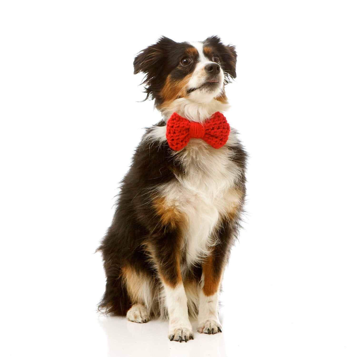 The Pretty Bow for Dogs on Valentine's Day, Formal Occasions and Parties: SIZE SMALL (Available in over 30 Colors)