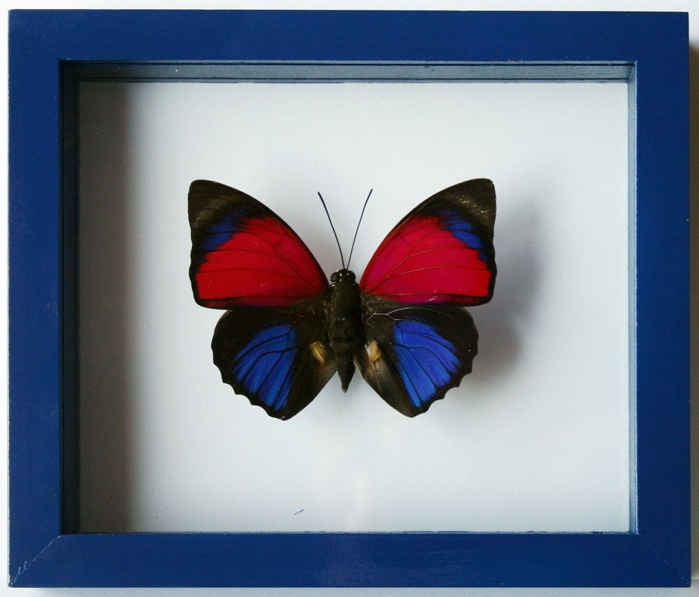 Purple and Blue Butterfly 4th of July Sale 25% off