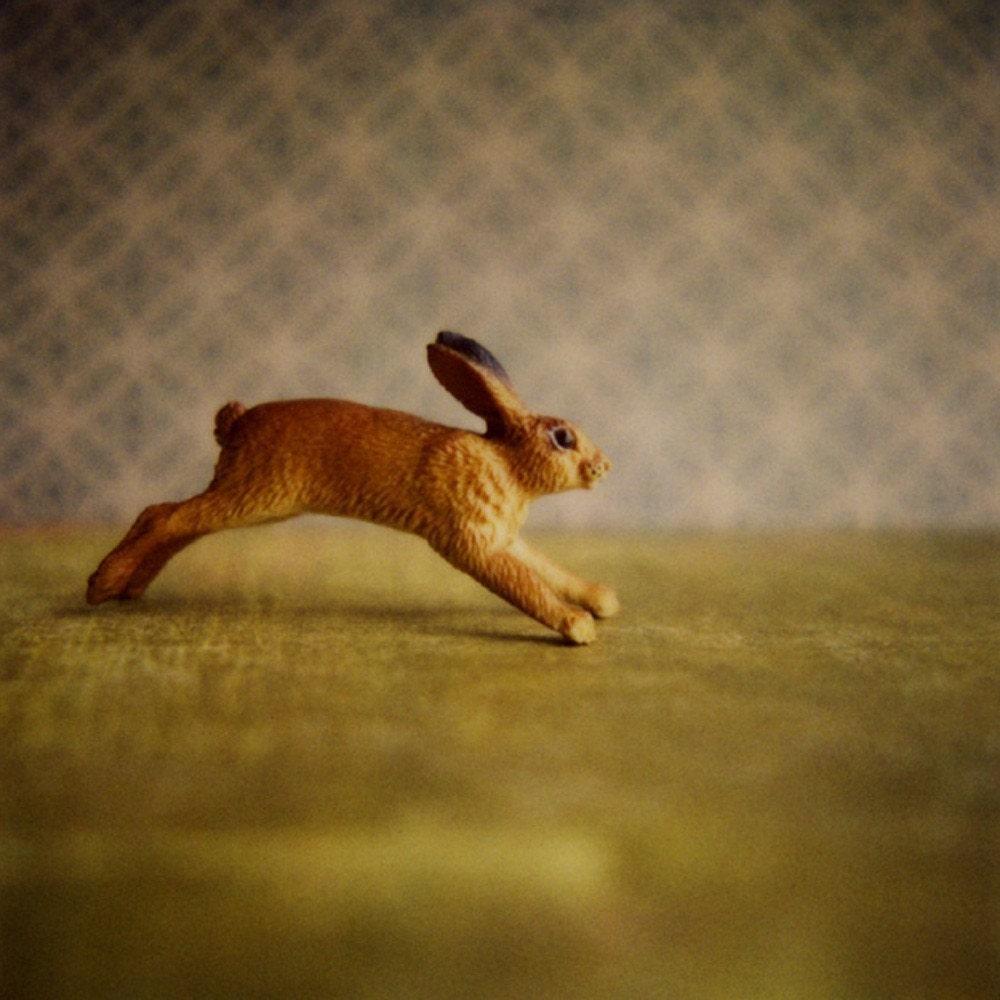 Rabbit, print