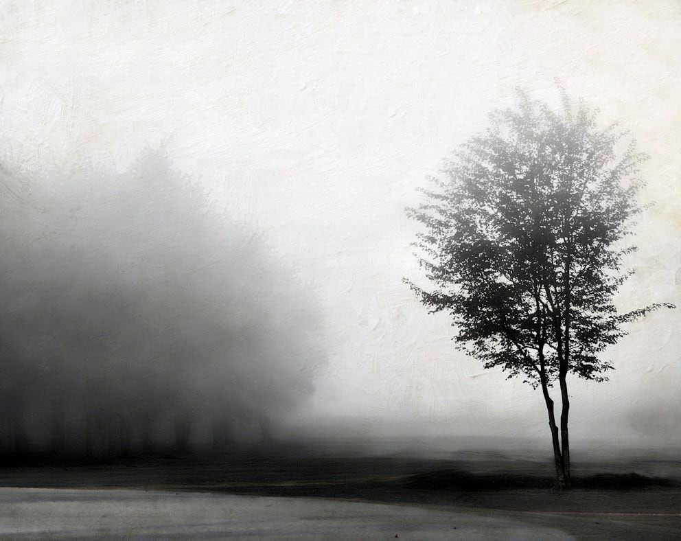 Black and white landscape photo autumn fog nature neutral minimalism modern trees - Grey 8 x 10 - gbrosseau
