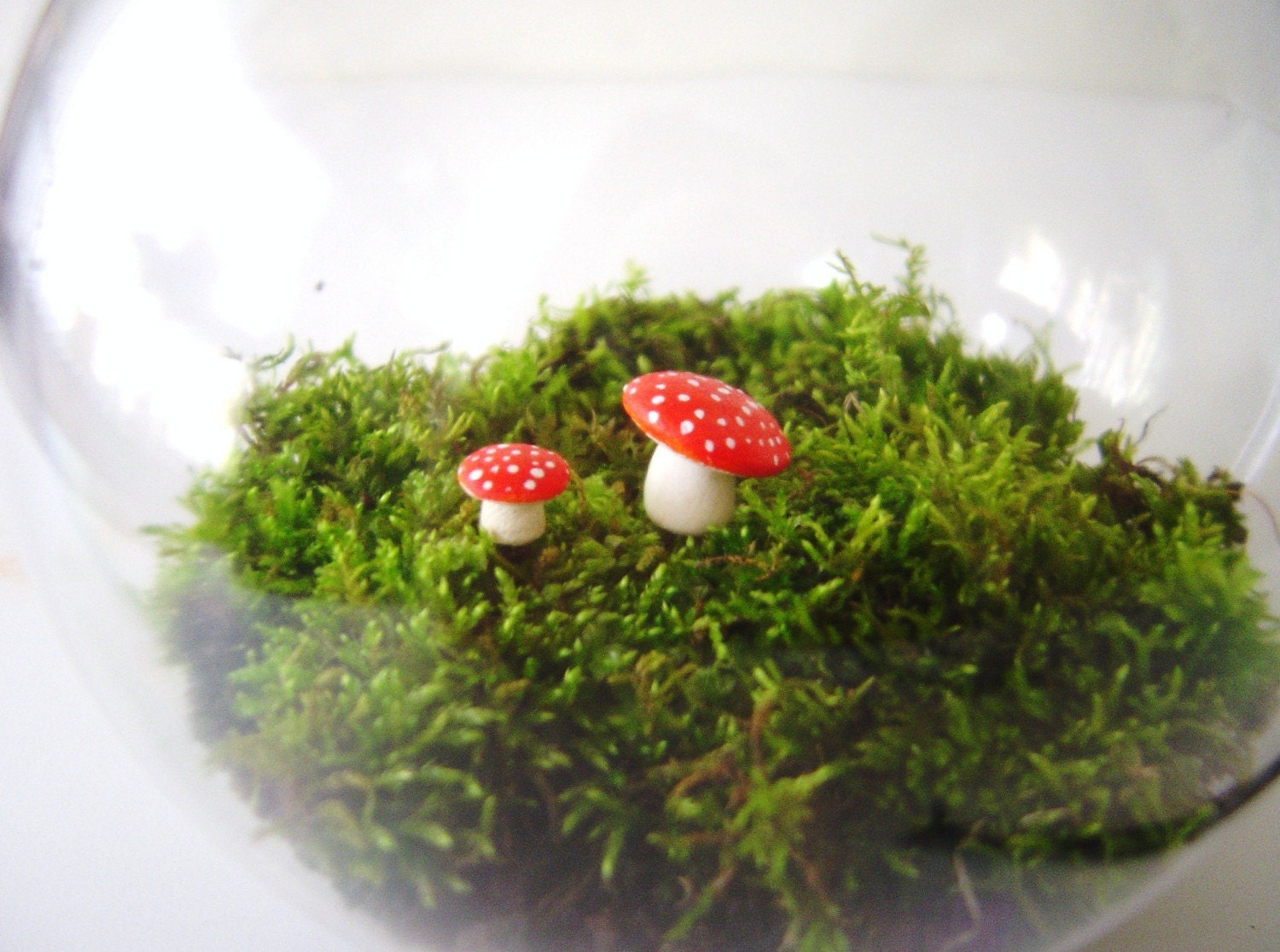 The Toadstool's Moss Garden Sphere - Large