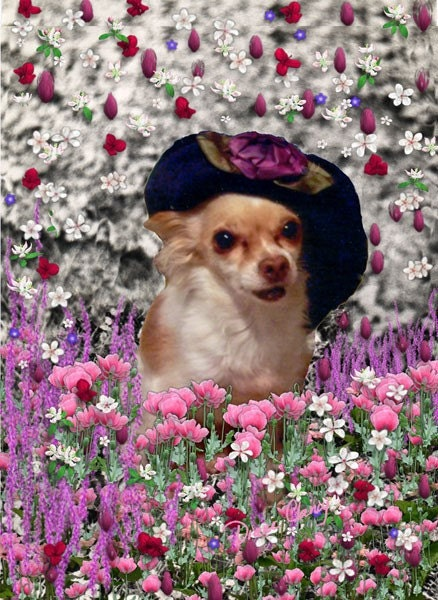 Painting (Digital Collage) - Chi Chi in Flowers - Art Card, ACEO - DianeClancy