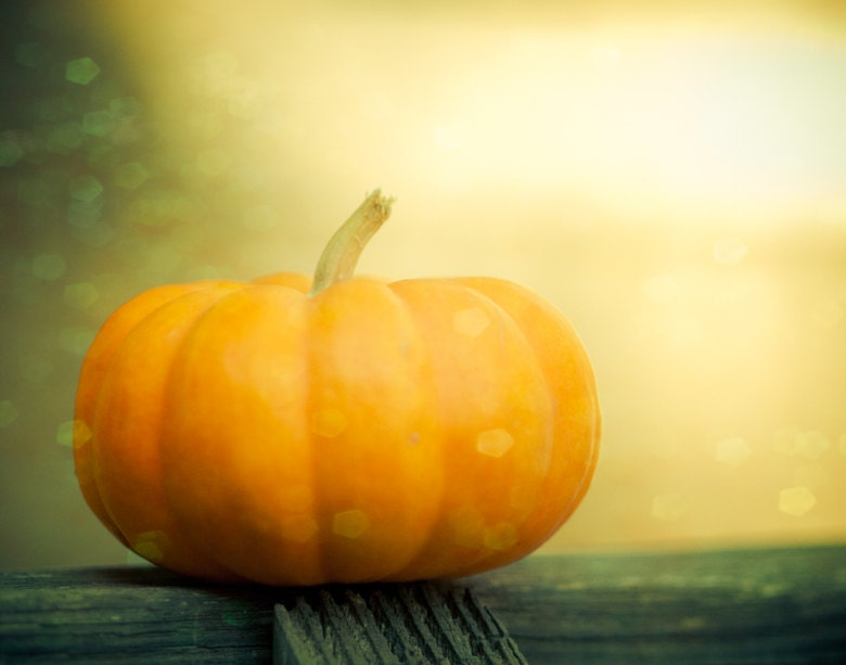 Pumpkin, Halloween Photo, Orange, Gourds, Halloween Decor, Still Life, Fall, Autumn Art, 8 x 10 Print - Fine Art photography, Kitchen Decor - Squintphotography
