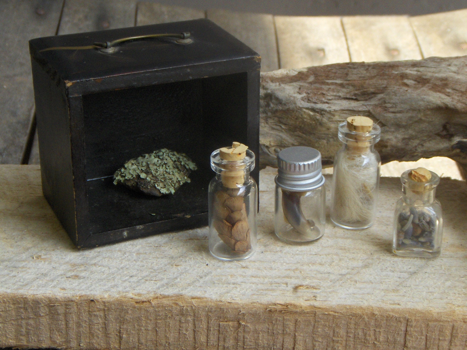 Forest Specimens No. 1 Miniature Antique wood curio box diorama. Tiny Bottles of Wolf Fur, Hemlock Pine cones, lavender buds, Fox claws