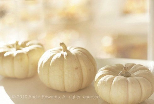 Pumpkins in Autumn Sunlight 8x10 Fine Art Print: pumpkin, white,fall,thanksgiving,holiday,gold, golden, pastel,leaves,amber,november