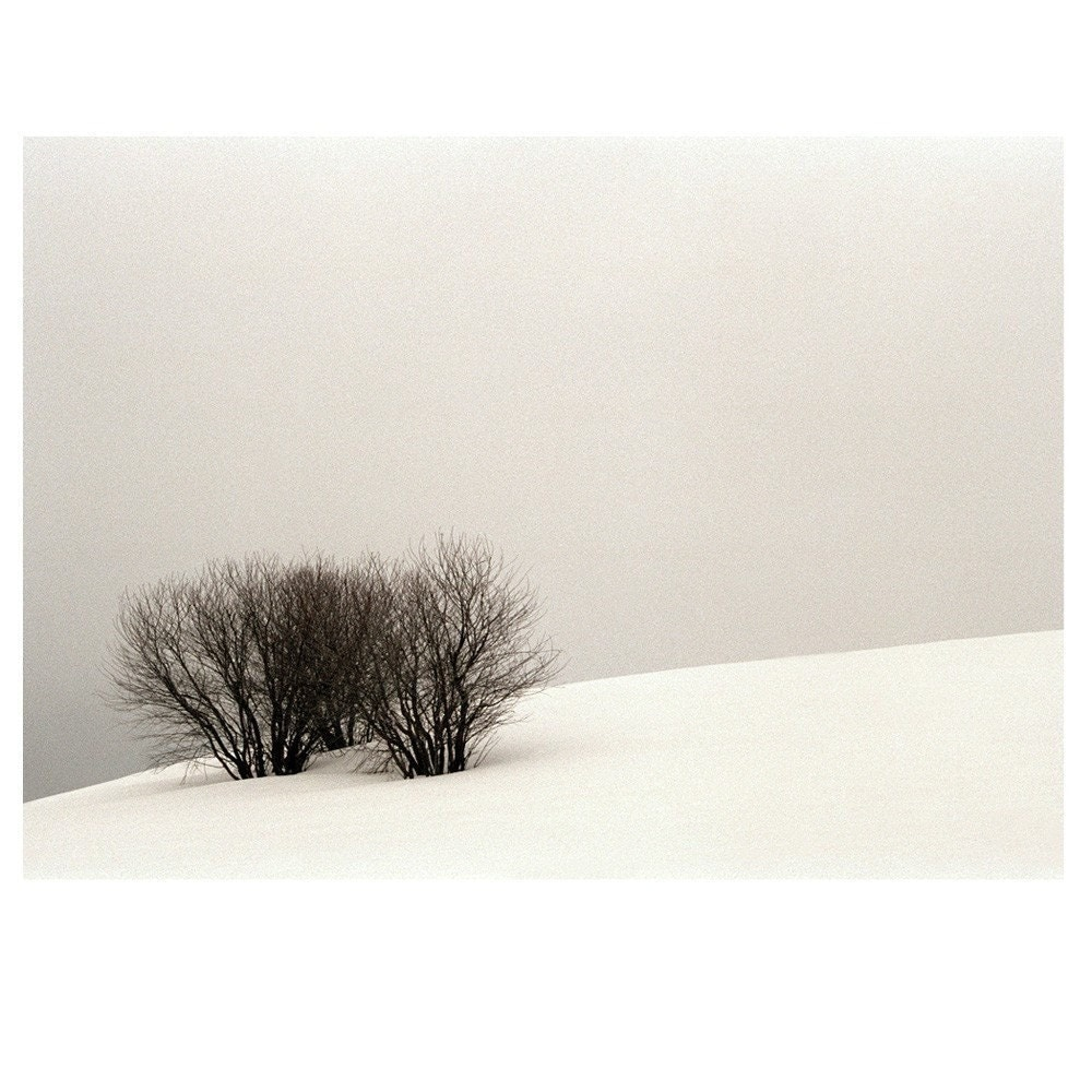 Three Trees Original Signed Fine Art Photograph
