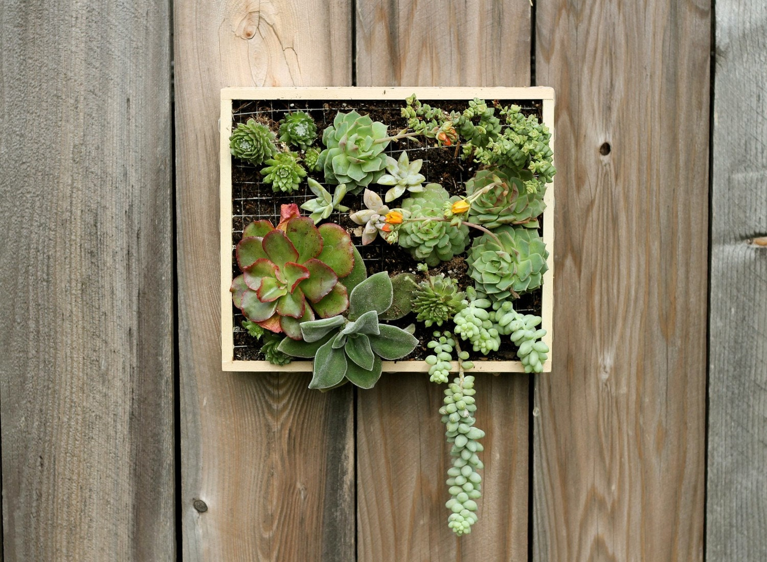 Step-by-Step PDF Instructions: Wall-Mounted Succulent Garden - radmegan