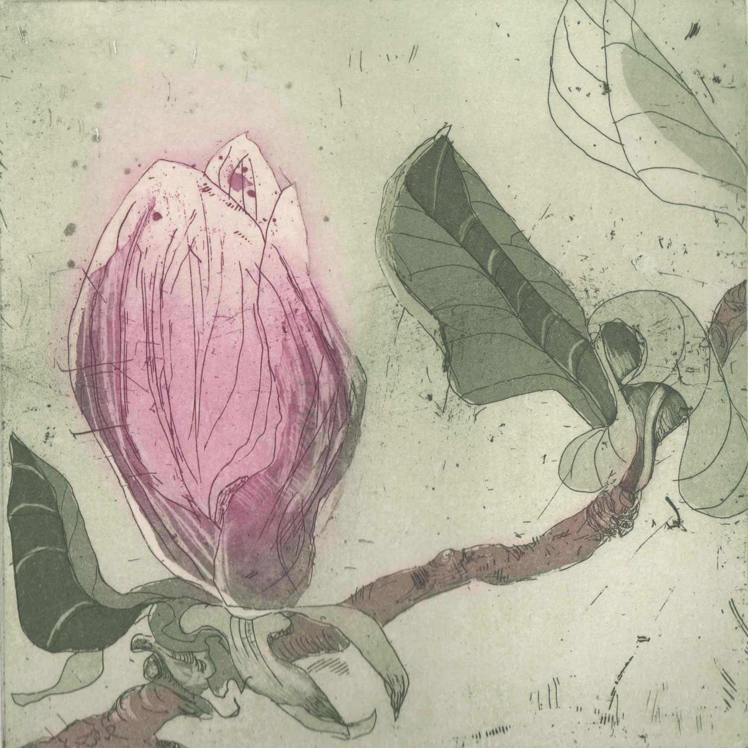 Pink Magnolia, original hand pulled etching and aquatint by Marta Wakula-Mac