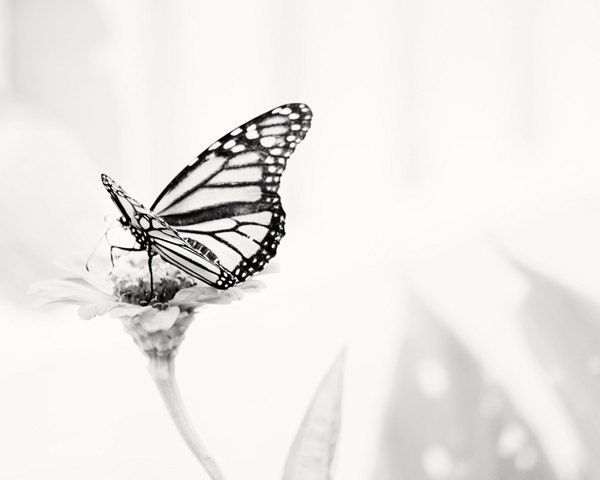 Monarch Butterfly in the Garden - 16x20 - Fine Art Nature Photography Print