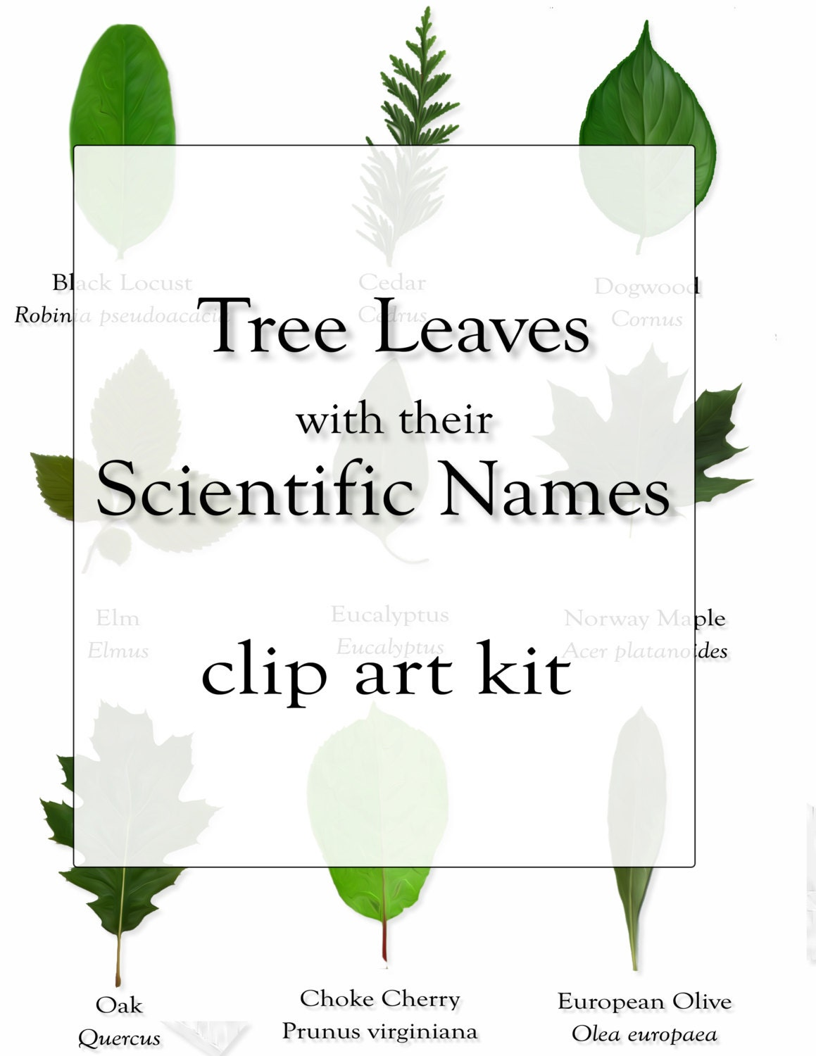 What Tree Is That? Tree Identification Guide at arborday. org Tree leaf names pictures