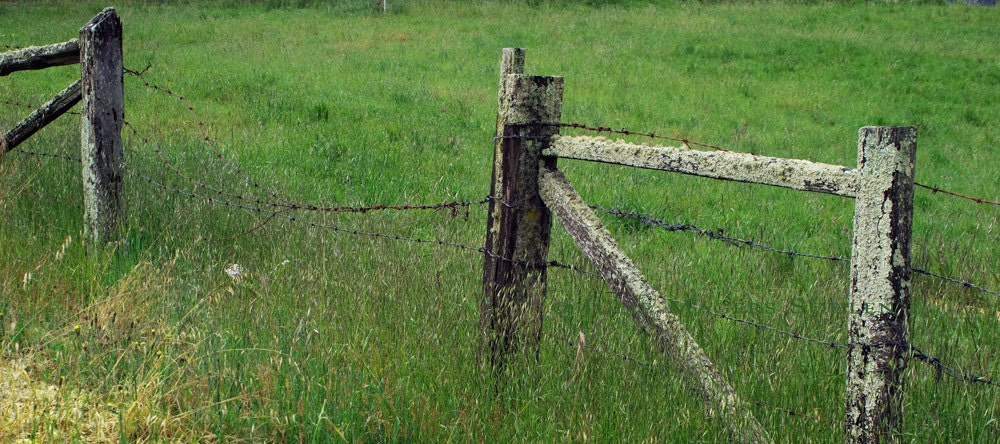Country Fence Photo -Rustic Weathered Fence Art Print -Wooden Fence Art -Green Grass Meadow -8x18 Panorama Colorado Fine Art Photograph