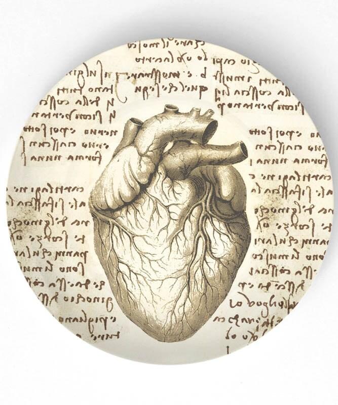 Human Heart Anatomy Da Vinci