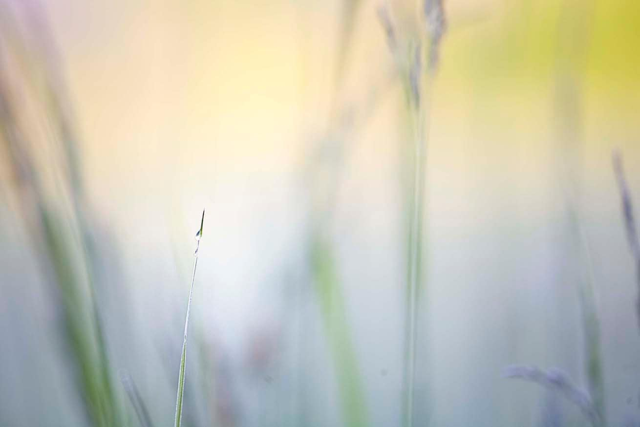 Spring photography-meadow,  botanical photo,  green,  grassy,  vintage chic  photo, kitchen farm  print decor wall   12x8 - KatyJanePhotography