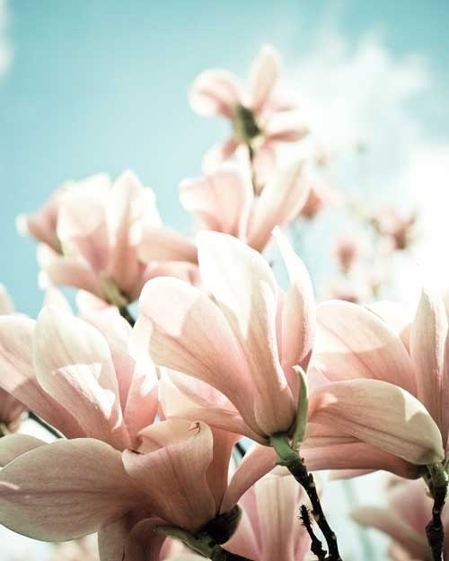 Развернуть свои границы.  пастельный розовый цвет фотографии.  романтический печати.  потертый шик декора дома.  8x10 печати.  детской печати.  Ботанический.