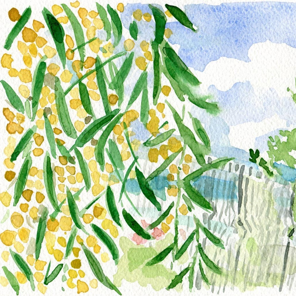 Mimosa bloom on the way to the Sea, Print of original watercolor, relaxed fresh, spring summer, landscape, vacation, limited edition - TheJoyofColor