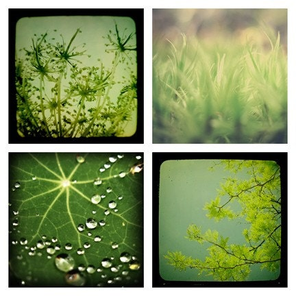 SALE  Lush - Set of Four 5x5 Prints in Green