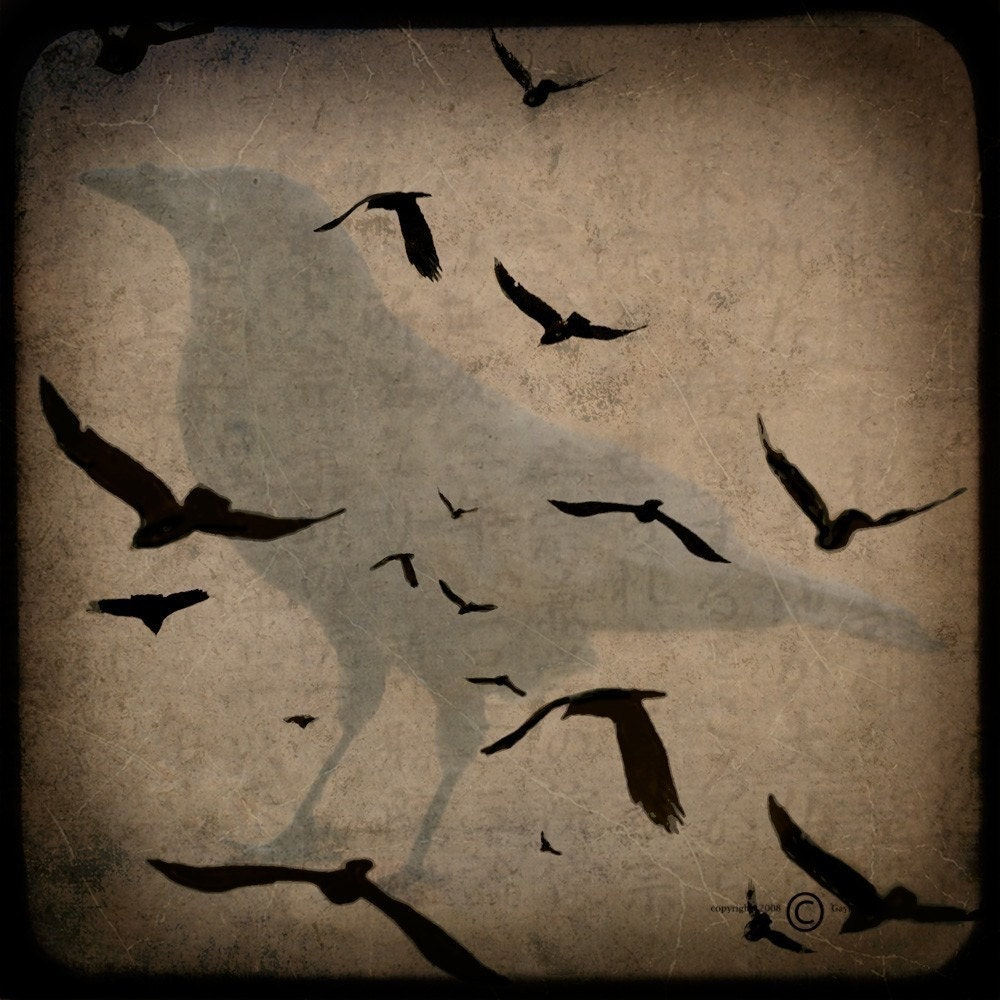 Black Crows Gathering Collage 5x5 TTV Original Signed Fine Art Photograph