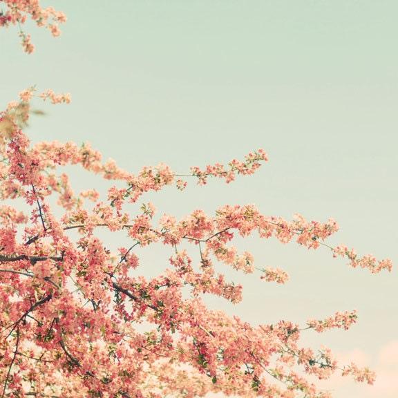 Урожай Цветет 5x5 Природа Фотография - винтажном стиле дерево цвести фотографии бледно голубой мяты розовая пастель