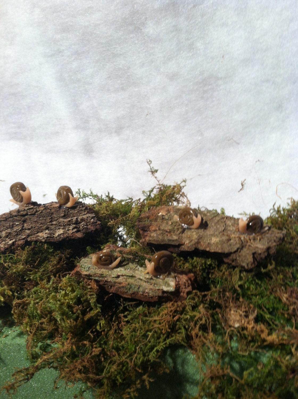 Fairy Garden and terrarium snails - EssentialWhimsy